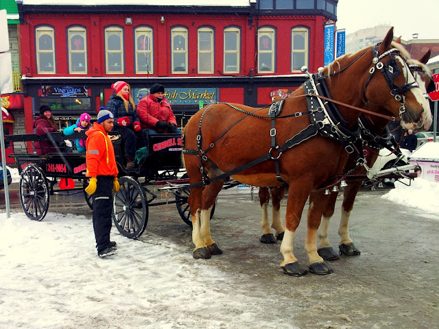 All aboard' les calèches! n Ottawa's Byward Market