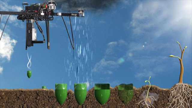 Usan drones para reforestar 36.000 árboles diarios