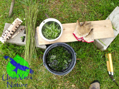 ortie, purin, urtica sp. stages plantes sauvages, Jura, Ain, Bourgogne