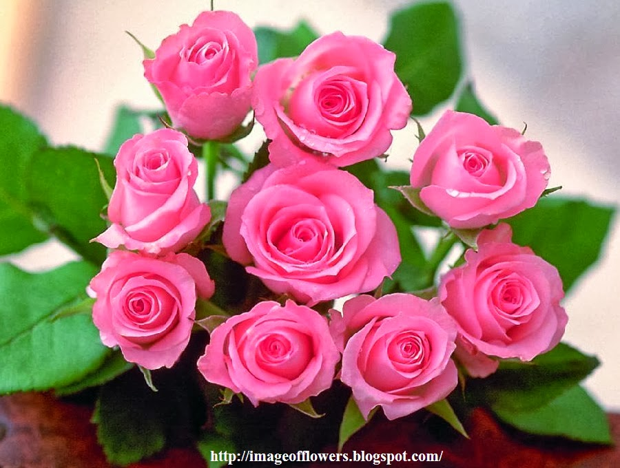 Beautiful flowers picture download free flowers photos - Pink roses background hd ...