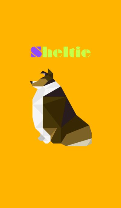 Sheltie(Dark sable)