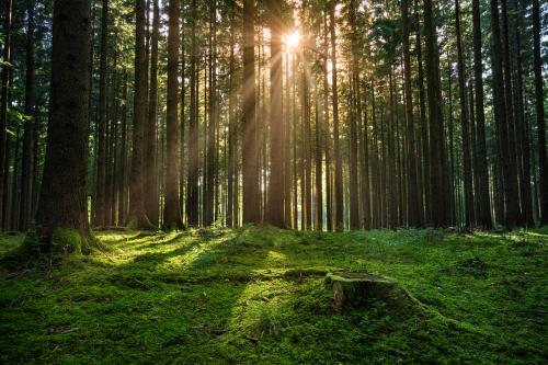 manfaat hutan