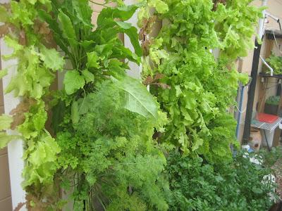 Aquaponic Gardening: Aquaponic Gardening - Urban Farming ...