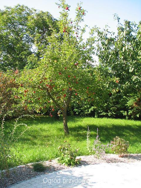 pierwszy dzień jesieni, ogród przydomowy