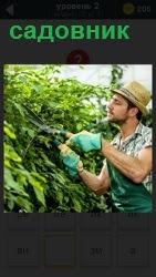 мужчина садовник подстригает газон ножницами в перчатках и шляпе