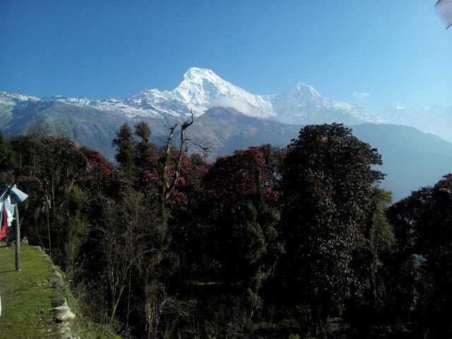 Annapurna Base Camp Trekking,Tadapani