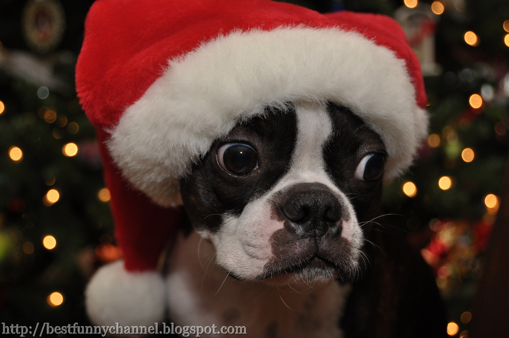 Cute And Funny Pictures Of Animals 16 Christmas