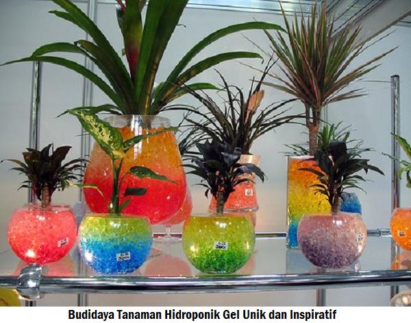 Budidaya Tanaman Hidroponik Gel Unik dan Inspiratif