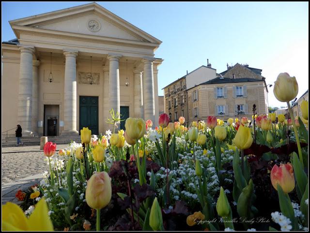 Tulipes Versailles Saint-Symphorien Montreuil