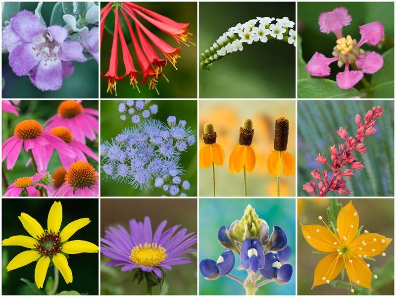 Plantas-nativas-Texas