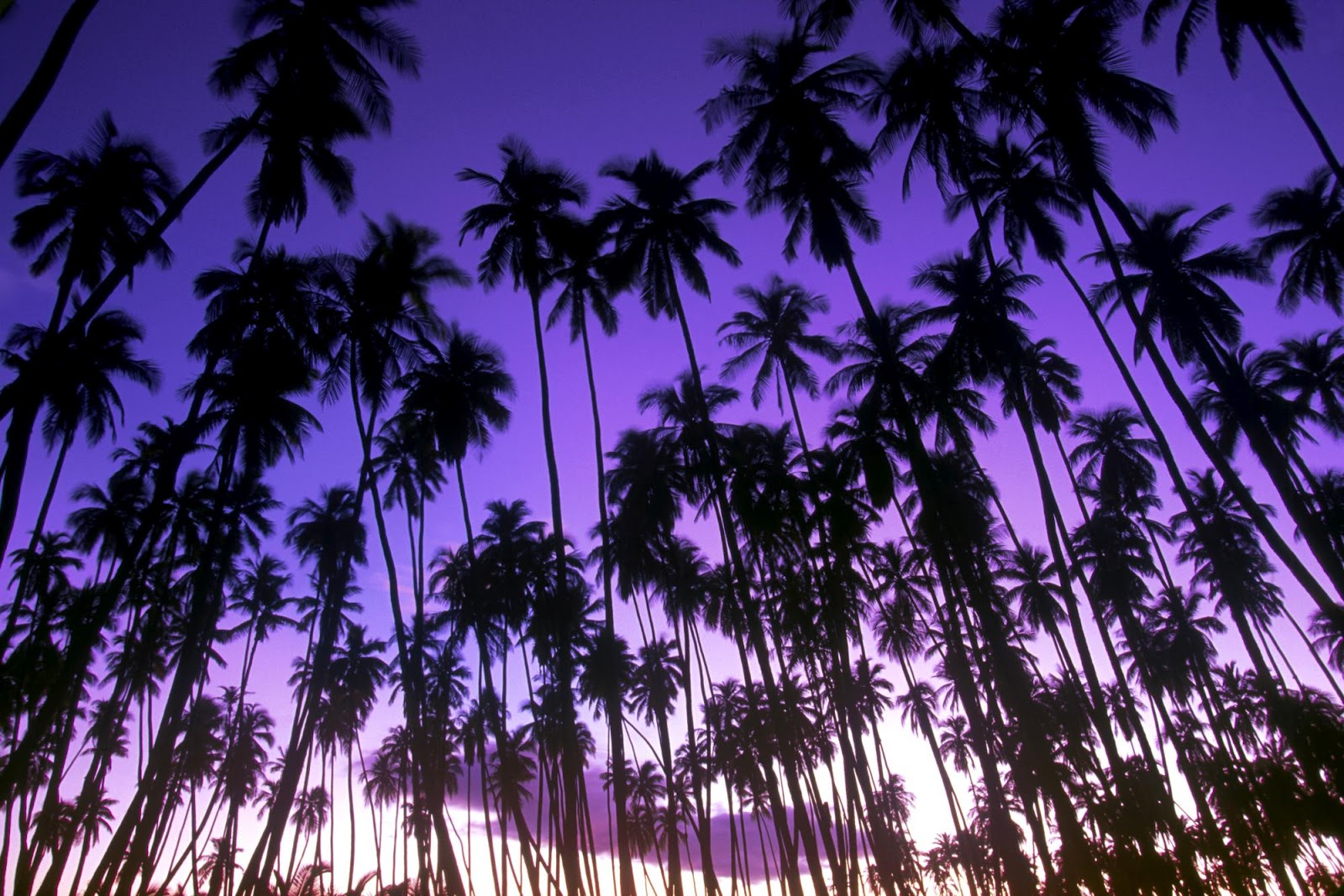 3d Animated Gif Wallpapers Wnp Wallpapers Amp Pictures Widescreen Beautiful Trees