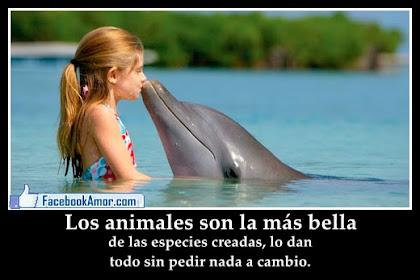 Frases De Amor Para Animales