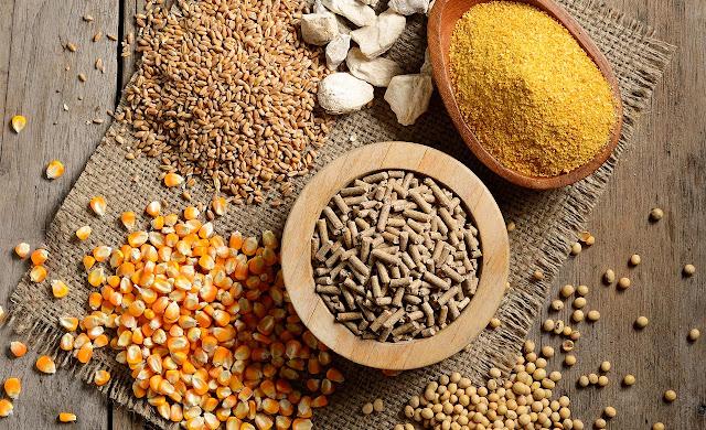 5 bí mật' về khoáng chất trong công thức thức ăn chăn nuôi Feed