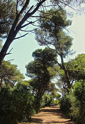 Deniz ile Devri Alem denizmontreal.blogspot.com