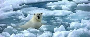 Cambio climático problemas ambiental
