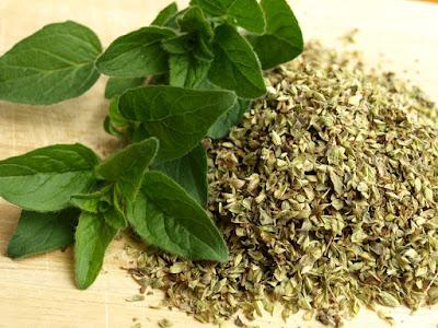 daun oregano, herbal, kandungan oregano, manfaat oregano, manfaat oregano untuk kesehatan, Manfaat Tanaman Herbal, oregano,