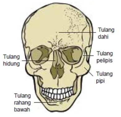 Bagian-Bagian Rangka Kepala dan Fungsinya