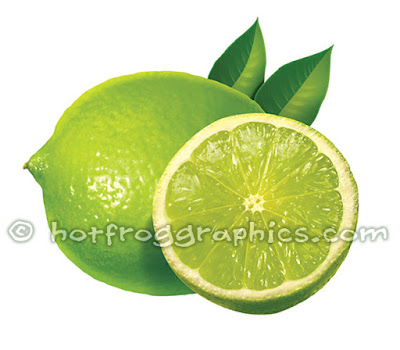 illustration of Limes on white background