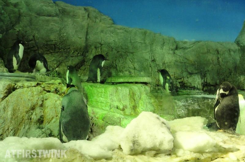 Osaka Aquarium Kaiyukan adelie penguin
