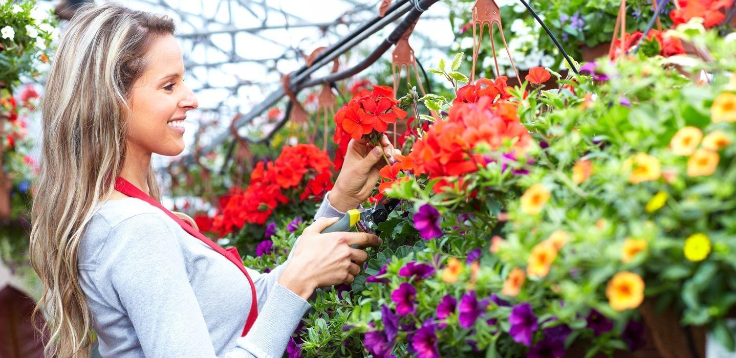 Fotografias De Mariposas Y Flores: Imágene Experience: Fotografías De Jardines, Jardineros