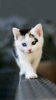 samsung-s4-tam-ekran-kapak-resmi-kedi