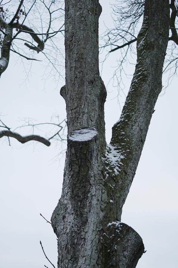 Blog + Fotografie by it's me! - Draussen - Frau Frieda sucht Schnee, verschneiter Baumstamm