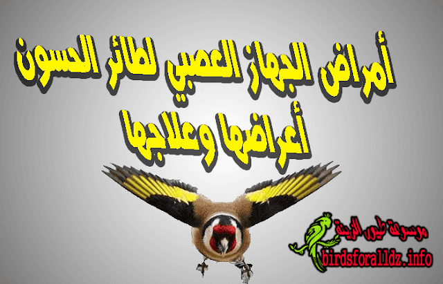 امراض الجهاز العصبي عند طائر الحسون وعلاجها
