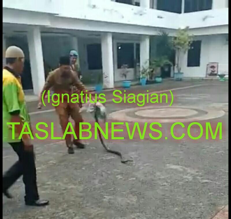 Yudha, salah seorang ASN saat mengamankan ular sawah dari halaman Kantor Walikota Tanjungbalai, Senin (4/2).