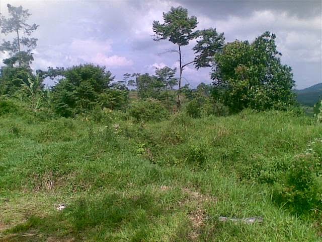 Foto(5376) Jual Tanah Murah Luas 130 Ha, Harga 50.000 Di Puncak Jual tanah di cipanas jual tanah di puncak