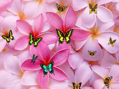 butterfly-flying-on-the-morning-flowers-pics