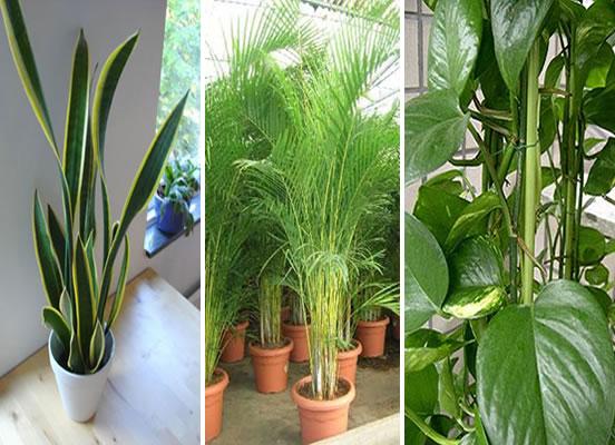 Alba hogar plantas de interior for Flores para interiores con poca luz