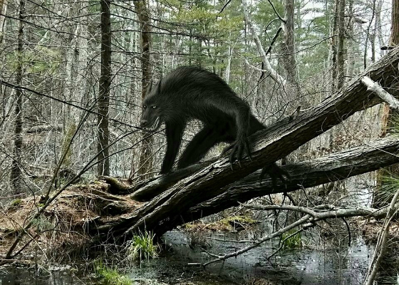 Upright 'Wolf' in Texas Woods