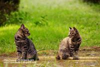 向かい合うネコ写真