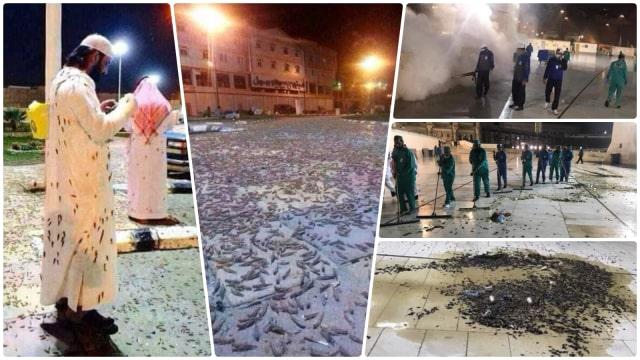 Jutaan Serangga Serbu Masjidil Haram, Warga: Baru Kali Ini Terjadi