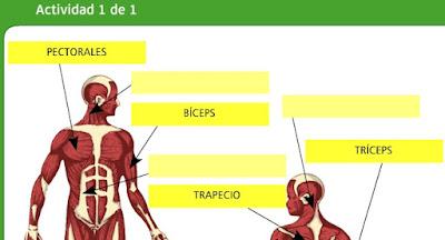 http://www.bromera.com/tl_files/activitatsdigitals/natura_6c_PA/natura6_cas_u02_pag24.swf