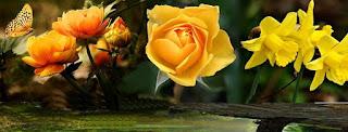 Gambar Cover Untuk Facebook bunga warna kuning