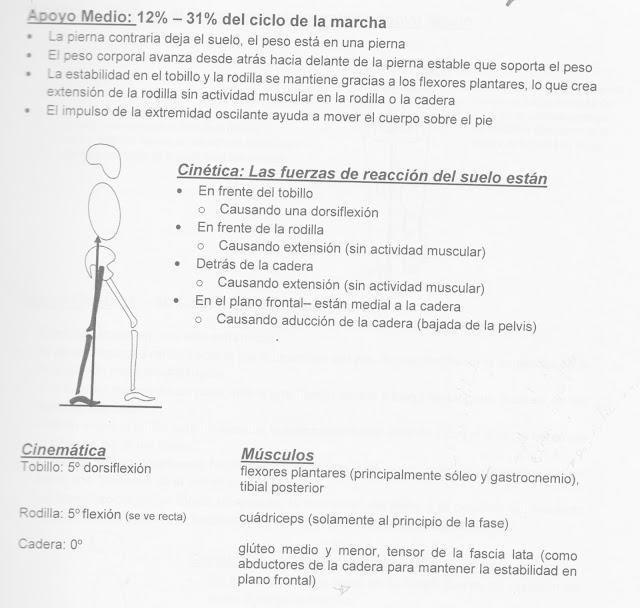 Fases de la Marcha / Fisioterapia