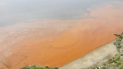 Ambon, Malukupost.com - Teluk Ambon terkena ledakan (blooming) fitoplankton beracun jenis Dinoflagelata Gonyaulax yang dapat mengakibatkan berkurangnya kadar oksigen di perairan dan memicu kematian ikan.    Peneliti Pusat Penelitian Laut Dalam-Lembaga Ilmu Pengetahuan Indonesia (P2LD-LIPI), Hanung Agus Mulyadi di Ambon, Jumat (11/1), mengatakan ledakan itu terjadi sejak Kamis (10/1) pagi, dengan luasan mencapai 31 hektare di perairan Desa Lateri dan Passo, Kecamatan Baguala hingga kawasan guru-guru, Poka, Kecamatan Teluk Ambon.