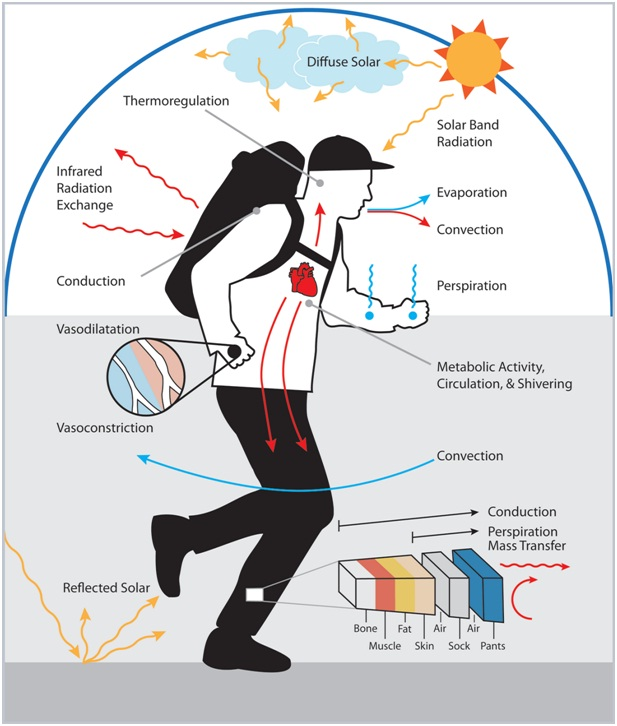 Human Body Temperature during Exercise