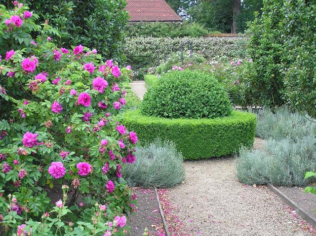 Ogród Różany w Loseley Park