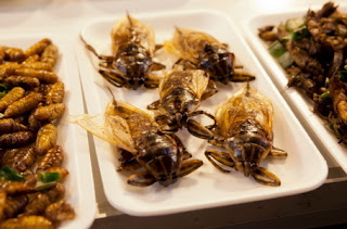 The French company Start As Source of Nutrients Insects Develop Environmentally Friendly
