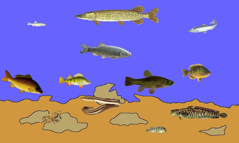 Flora e fauna di fiumi e laghi for Pesci di fiume
