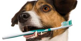 qual-a-melhor-pasta-de-dente-para-cachorro
