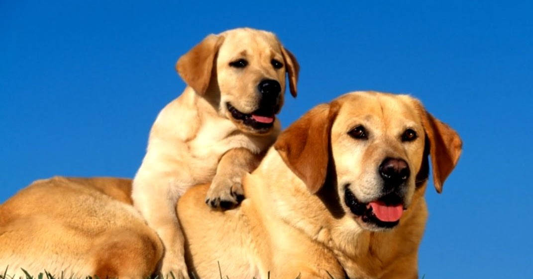 Beautiful Dog Wallpaper Wallpapers Quality