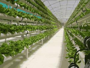 Tahapan Membangun Green House Untuk Budidaya Tanaman Hidroponik | Plastik Uv