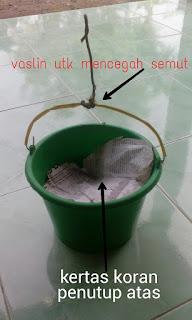 cara menyimpan kroto tanpa kulkas