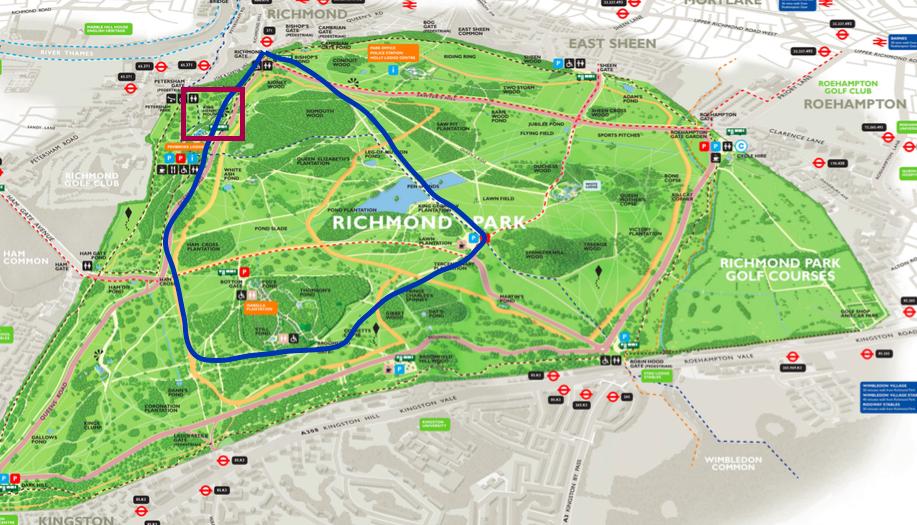 在英國的臺製薑餅人: 『倫敦近郊』到Richmond Park (里奇蒙公園)找小鹿班比