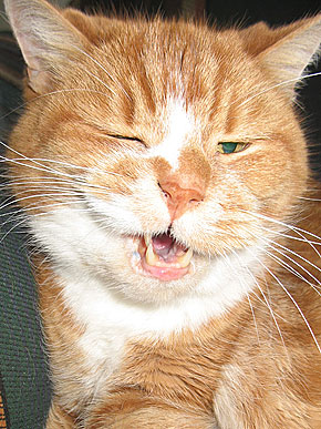 the laughing pet our monday morning smile the winking cat