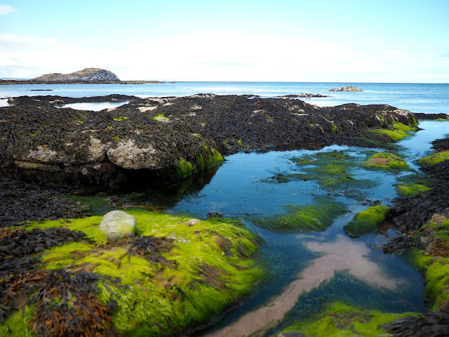 Rock pools by North Berwick, East Lothian, Scotland