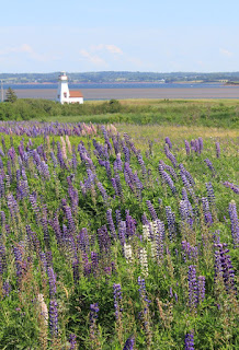 Lighthouse and field of lupins in bloom near French River, Prince Edward Island
